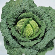 Cabbage Ormskirk (Savoy) - 300 seeds
